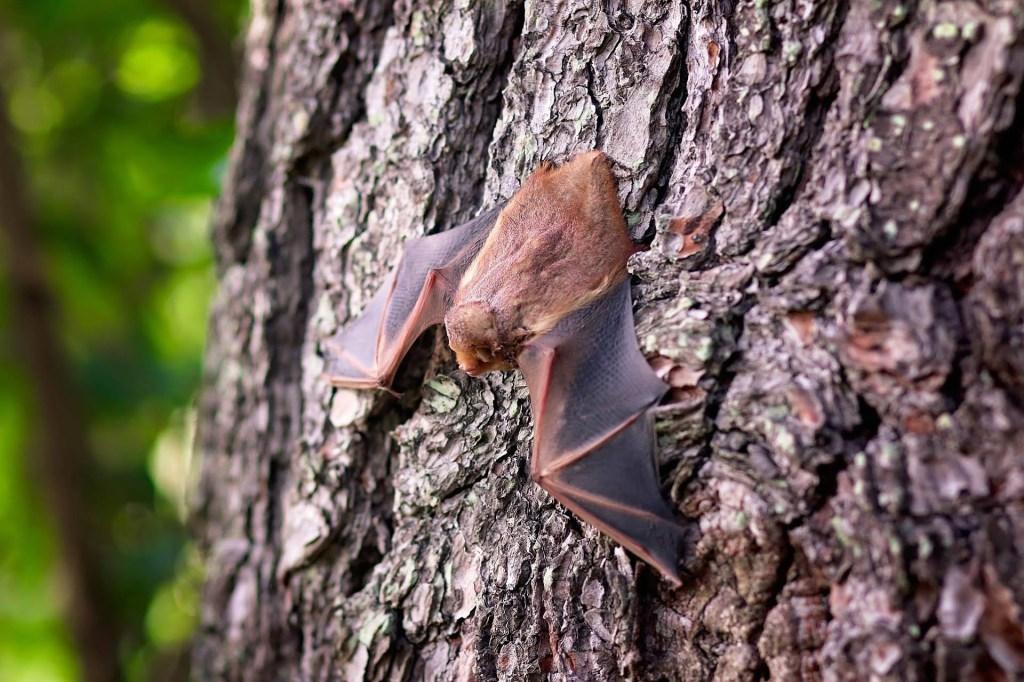 Nietoperze będą w Polsce lepiej chronione
