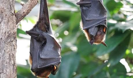 Ochrona dzikiej przyrody może pomóc zapobiec kolejnym epidemiom chorób odzwierzęcych
