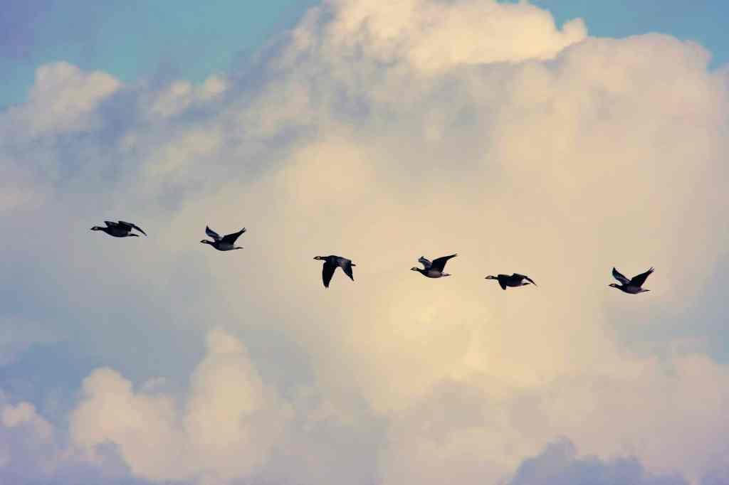 Dziś Światowy Dzień Ptaków Wędrownych