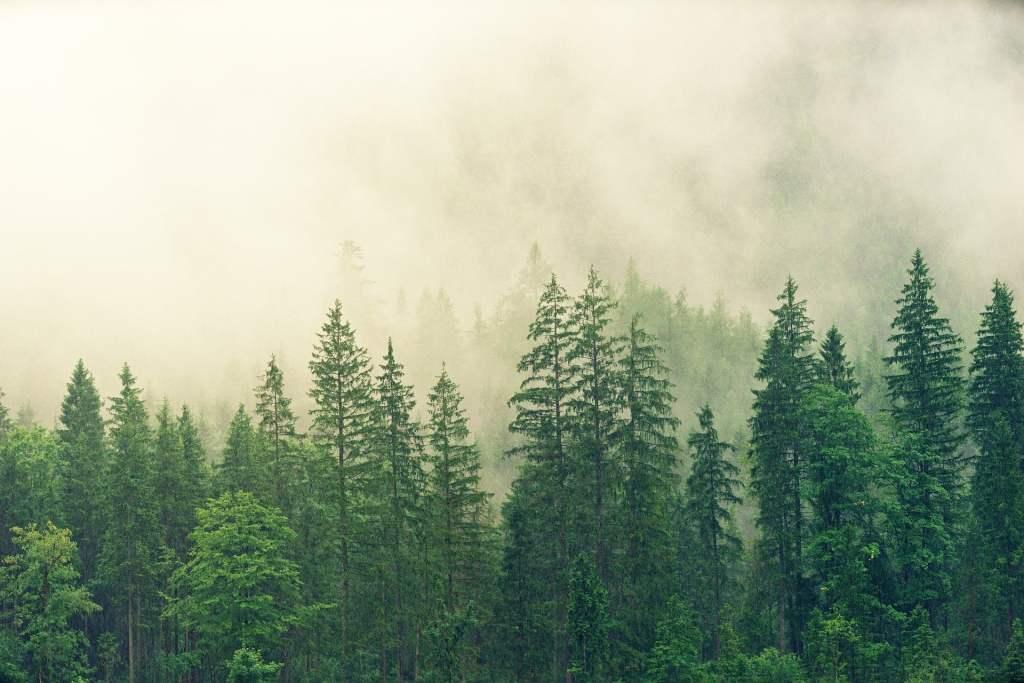 Zmiany klimatu wpływają na ewolucję drzew