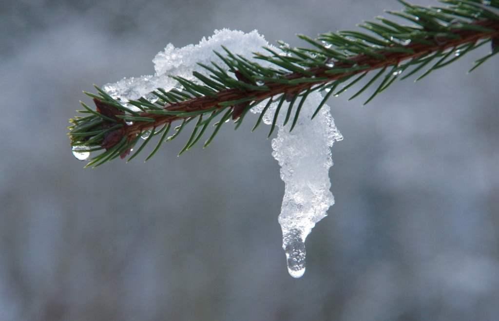 Duże różnice temperatur w trakcie zimy to wyraźny sygnał zmian klimatycznych