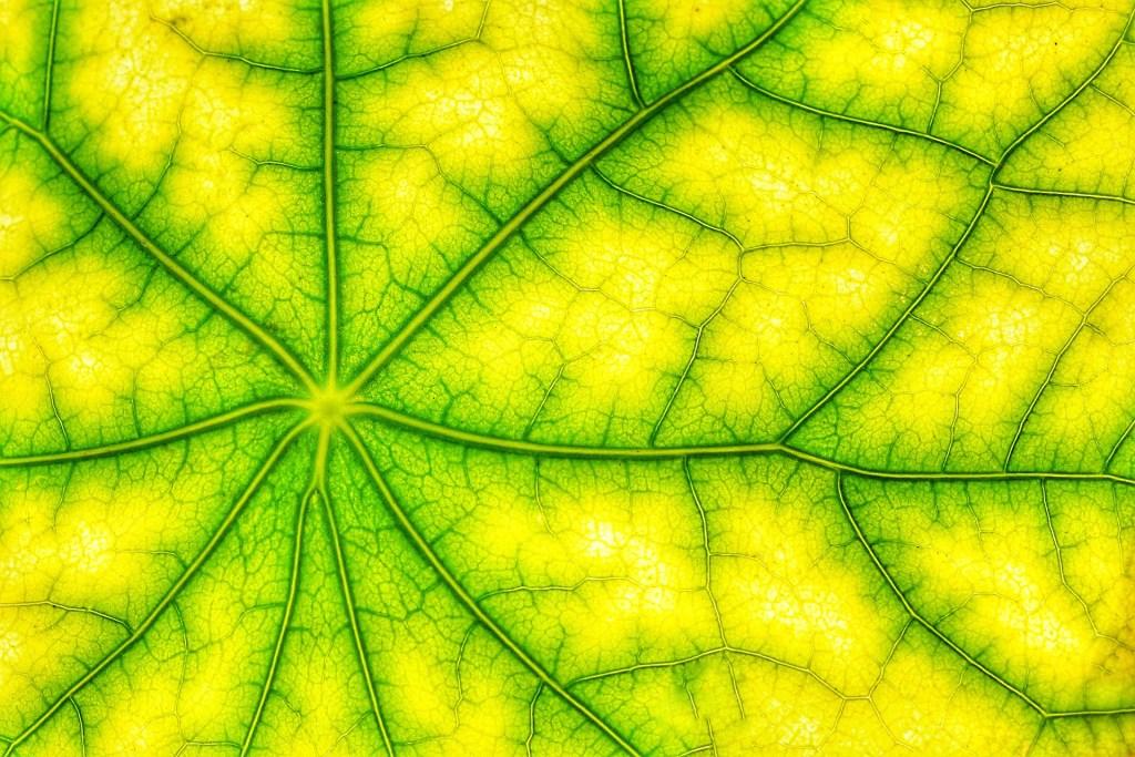Polacy mają pomysł na bardziej wydajną, sztuczną fotosyntezę