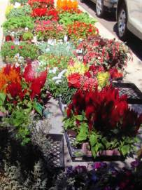 Colorful flowers for sale.