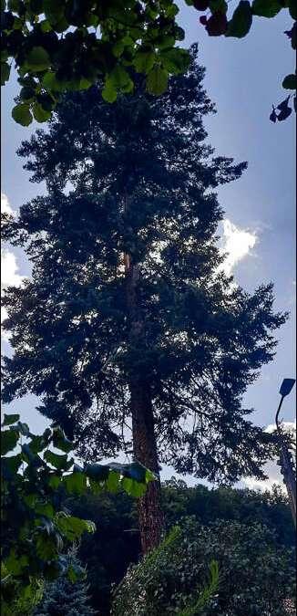 Piorun uderzył w drzewo