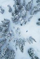 breathtaking-snow-trees
