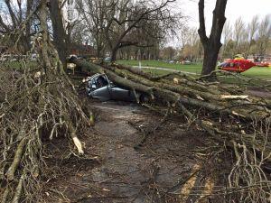 Tree lands on car in Selly Oak