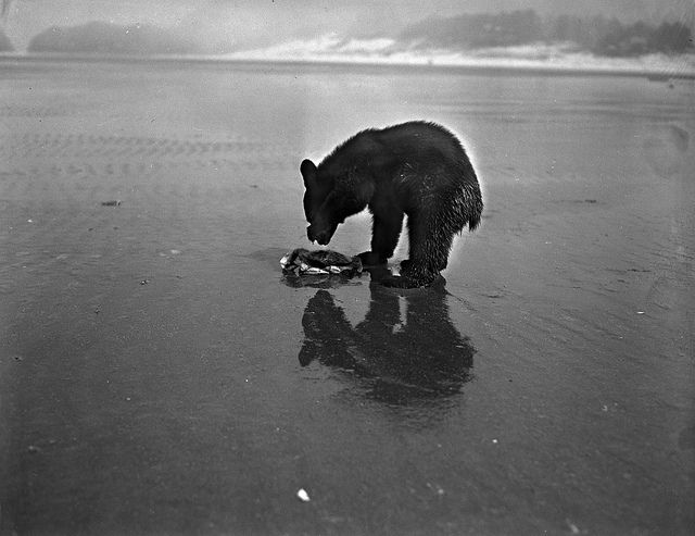 This bear hates the environment.