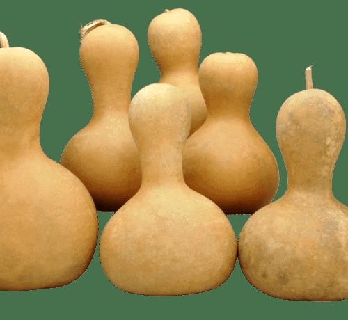 Bottleneck gourds