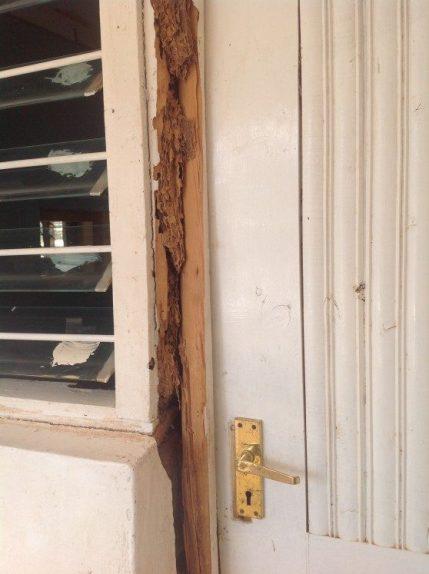 termite-door-1