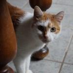Tierheim Linxbachhof: Neue Einrichtungen für das Katzenhaus