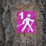 Sport- und Erlebnistag am Bostalsee: Nordic-Walking-Angebot