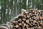 Wundermittel zur Emmissionsreduktion oder Todesurteil für unsere Wälder?