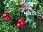 Naturpark-Dorf Schwarzenbach: Kulinarische Wanderung zu beerenstarken Herbstwildfrüchten