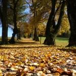 Herbstwanderung durch Nonnweiler