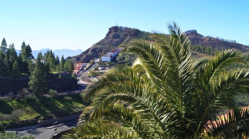 Typische Palmenvegetation auf den kanarische Inseln