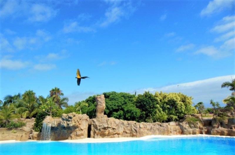 Bunte Vögel fliegen im Loro Parque von Teneriffa
