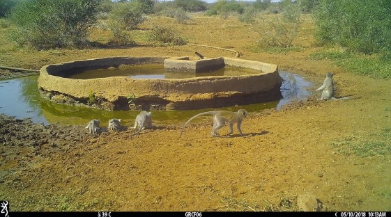 water hole camera trap