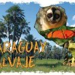 Kölner Ehepaar bringt den Paraguayern den Chaco näher