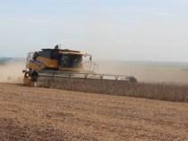 Trotz Preisverfall weiterhin verstärkter Sojaanbau