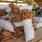 Paraguay größter Exporteur von Maniok