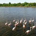 Geschichte und Natur im Chaco