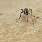 Neuer Virus im Anmarsch