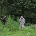 Abholzung für den Anbau von Marihuana
