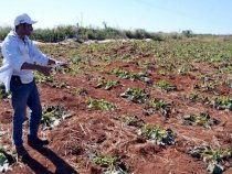 Frost sorgte für hohe Verluste in der Landwirtschaft