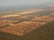Skrupellose Verbrecher holzen den Chaco gnandenlos ab