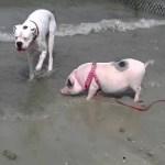 Hund und Schwein verletzten Kleinkinder schwer