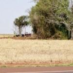 Infona interveniert auf Grundstück von deutschem Kolonisten