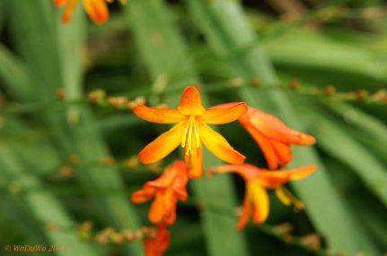 Blüte / Madeira