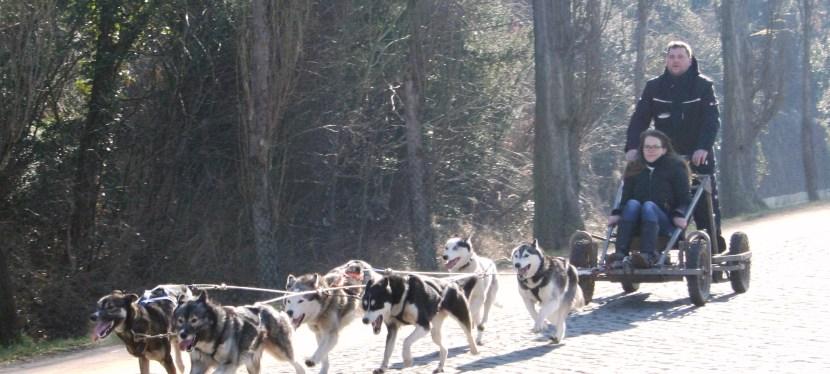 Internationale Schlittenhunderennen in Wörlitz