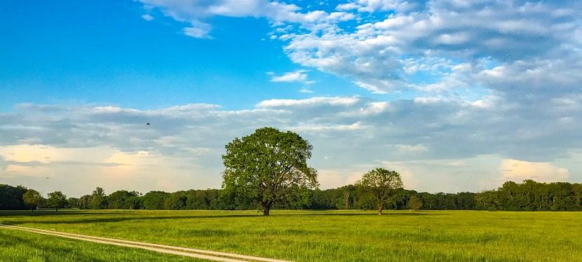 Wählt die Solitäreichen in der Wörlitzer Elbaue zu Deutschlands Naturwunder