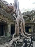 Silk Cotton Tree at Ta Prohm