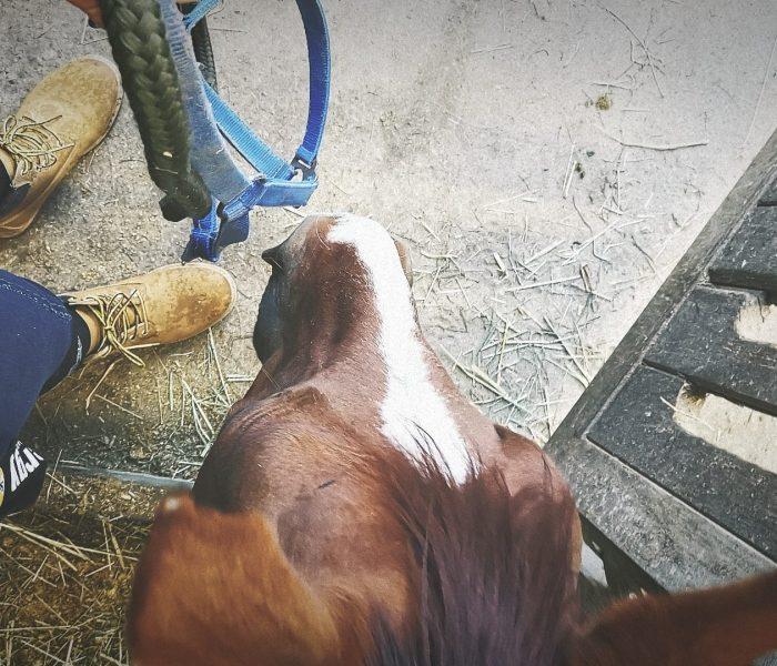 Warum der Ackergaul kein Springpferd …und das Springpferd kein Ackergaul werden muss