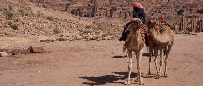 Foto Beduine auf Kamel in Petra