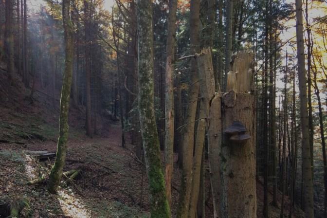 Foto Wandern im Wald