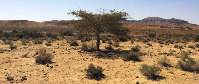 Foto Harsche Wüste