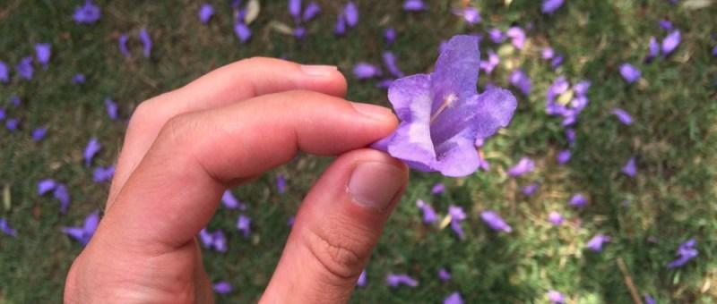 Foto Blüte aus Blütenmeer