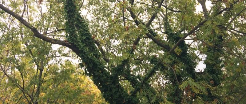 Foto Laubbäume im Herbst