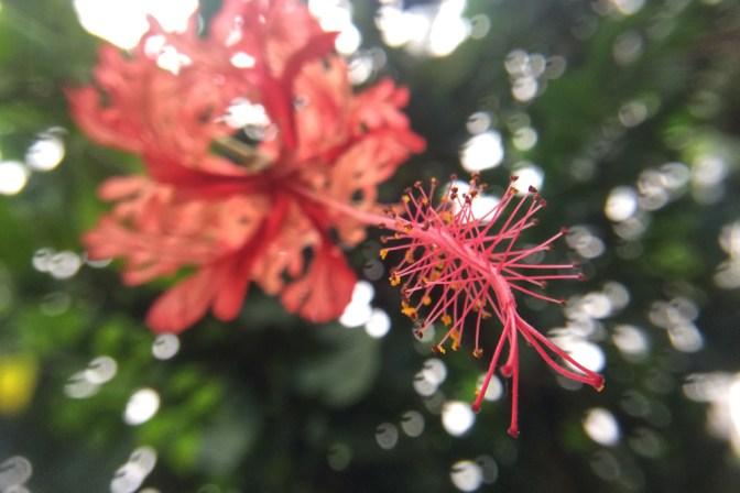 Foto Exotische Pflanze in heimischen Landen