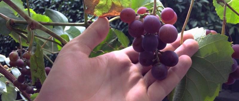 Foto Erlesener Wein