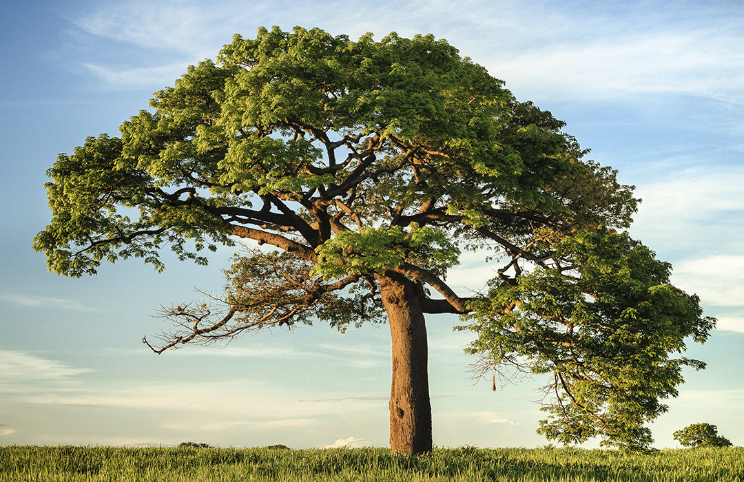 Etiopía planta más de 224 millones de árboles en un sólo día