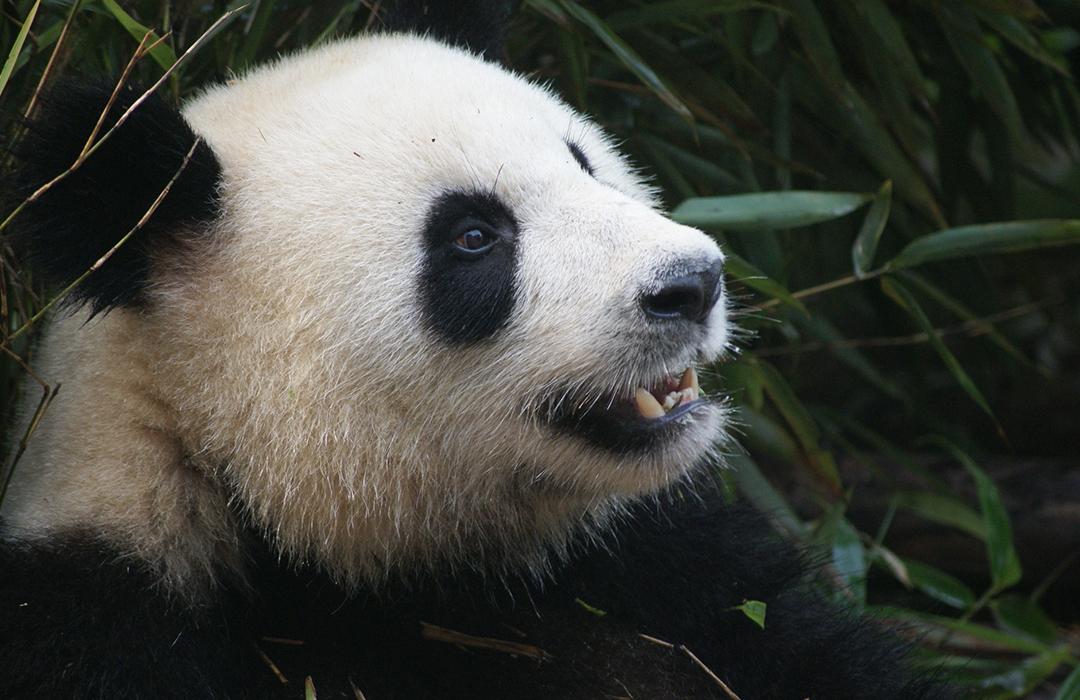 Reaparecen especies catalogadas como extintas