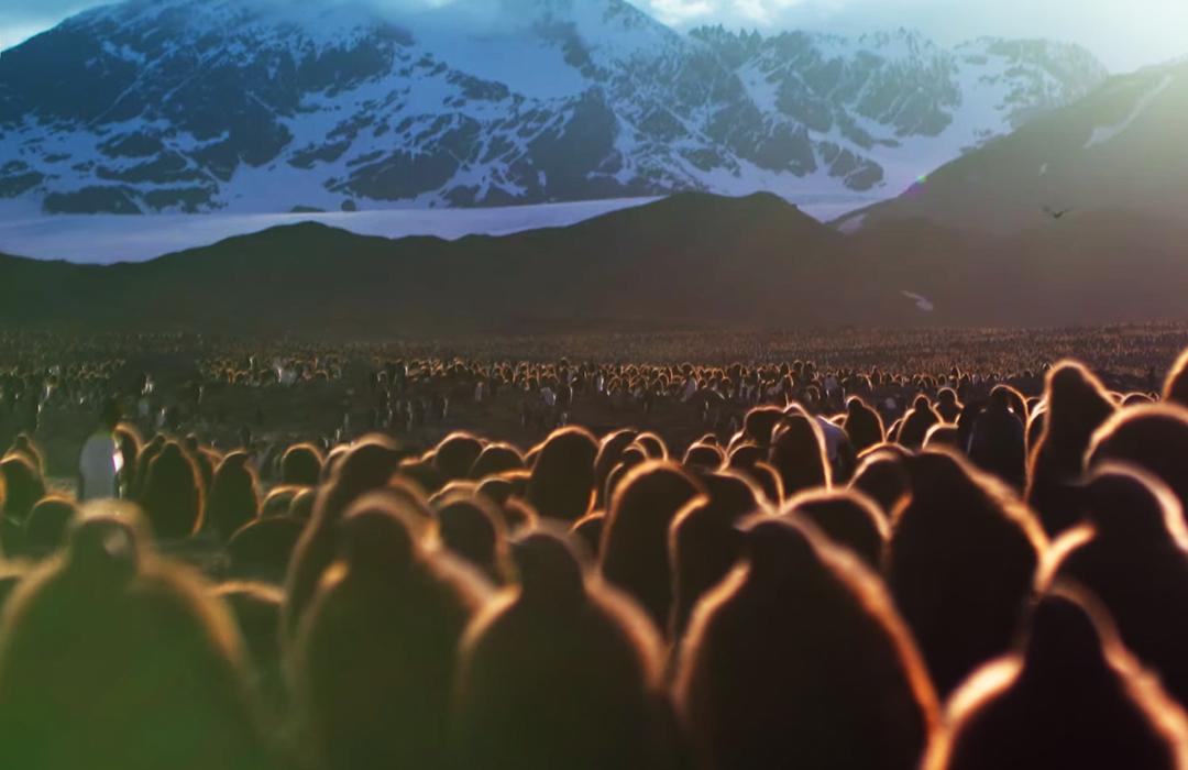 Mira el trailer del nuevo documental de David Attenborough