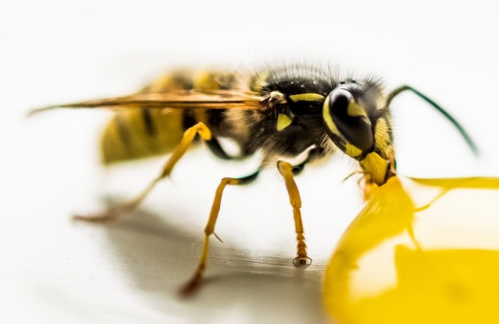 ¡Excelentes noticias! Las abejas pueden ayudar a detectar el covid-19
