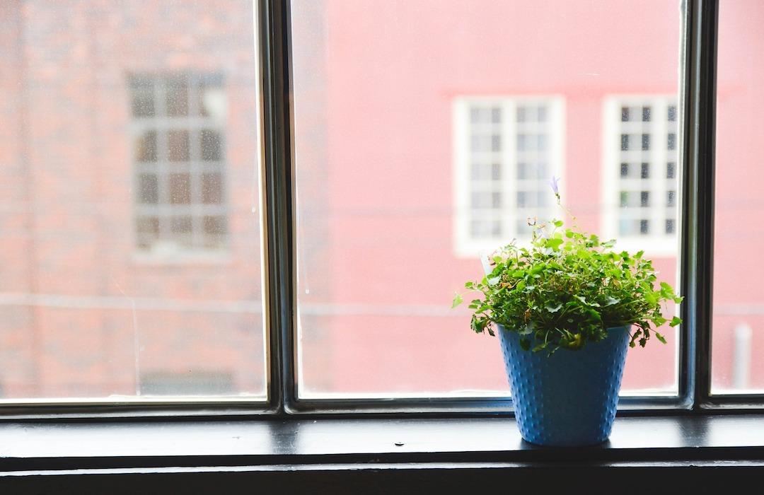 Cuidados para plantas de interior durante la primavera