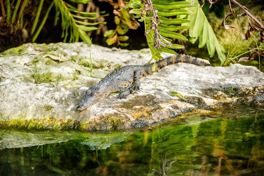 Los manglares: tesoros mexicanos protegidos por el turismo sostenible