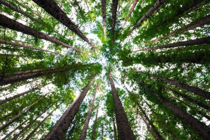 Reforestación digital: únete a la meta de reforestar 4,000 árboles en seis días